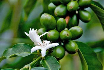 Coffee EStates for sale